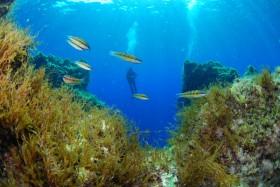Les fonds sous-marins de Malte