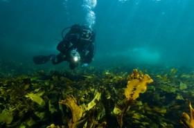 Forêt de kelp dans la région du Dhofar