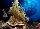 Fonds marins à Bali