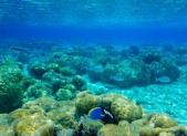 On observe toutes les nuances de bleus dans les fonds marins des Maldives.