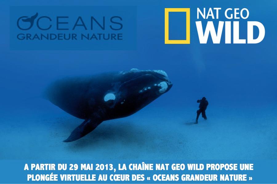 Nat Geo Wild célèbre l'océan pendant un mois