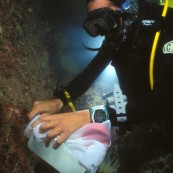 Plongeur scientifique récoltant des échantillons sur la roche.