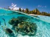 Snorkeling à Fakarava, en Polynésie