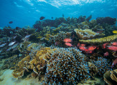 Récif corallien de Rodrigues