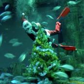 pere-noel-aquarium