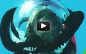 Vidéo : un chien qui fait de la plongée sous-marine