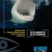 expo-requins-et-cie