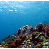 guide-especes-sous-marines-antilles