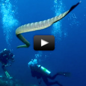 video-serpent-mer-gunung-api-sea-snake-island