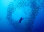 Plongée au milieu d'un banc de poissons au Soudan