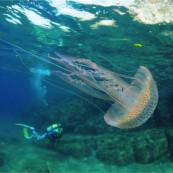 1er prix du concours photo sous-marine de Monaco 2013