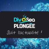 divosea-plongee-actualite