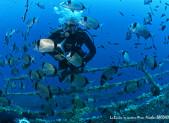 Un plongeur sur l'épave du Zenobia, à Chypre.