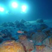 Des amphores de l'épave phénicienne découverte à Malte