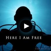 La plongée : un sentiment de liberté.