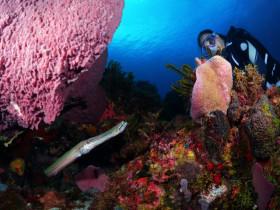 Fond sous-marin typique de la Martinique
