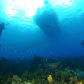 Des plongeurs sous un bateau en Martinique