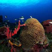 coraux-eponges-martinique