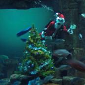 Le Père Noël sous l'eau !