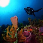 plongee-caraibes