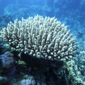 Le corail, source d'inspiration pour le prix COAL Art et Environnement