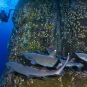 requins-weberberger