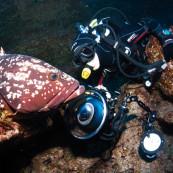 Mérou et plongeur photographe