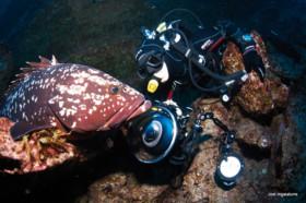 merou-plongeur