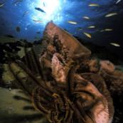 poisson-caraibes