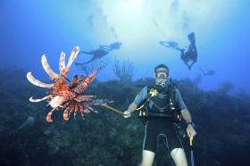 Un poisson lion capturé par un plongeur