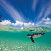 tortue-verte-wakatobi