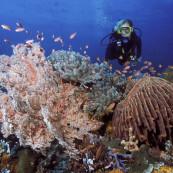 recif-plongeuse