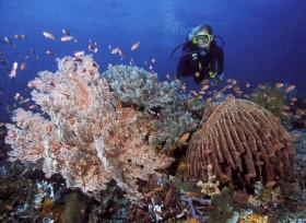 Une plongeuse devant un récif