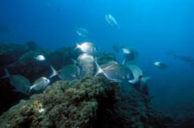 poissons-sars