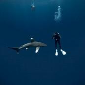 Les requins de la colère