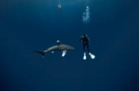 requins-colere
