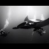 video-black-white-manta