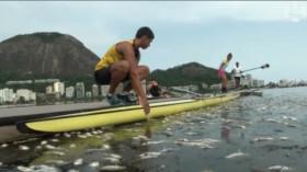 Des poissons morts sur un site olympique de Rio