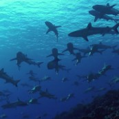 mur-requins-gris