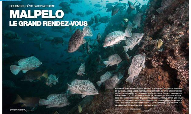 Malpelo, le paradis de Sandra Besudo