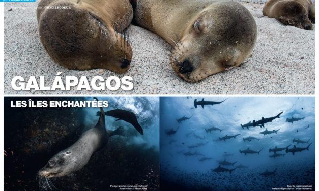 Galapagos. Dans le numéro 149 de Plongeurs International