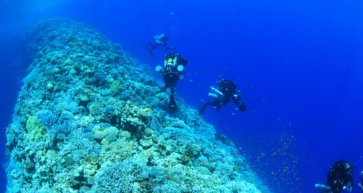 Croisière Abyssale Attitude, la Mer rouge réinventée.