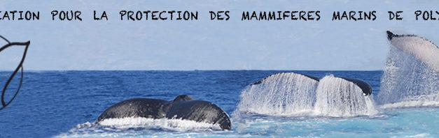 Comment observer les baleines ?