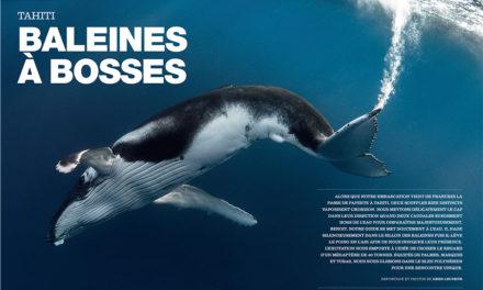 Baleines à bosses