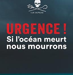 Coup de coeur Librairie : Urgence! Si l'océan meurt, nous mourrons!