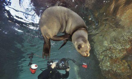 Dans Plongeurs International 147. Basse californie