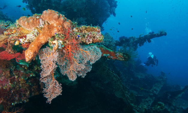Safari plongée à Bali (2)