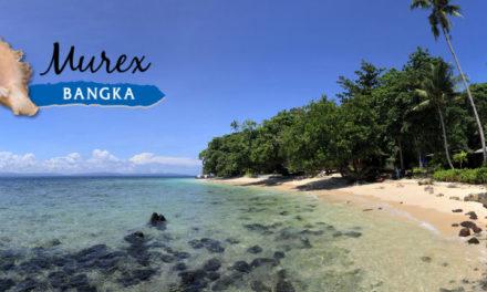 Dossier spécial Murex Dive Bangka (5)