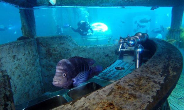 Plonger dans un aquarium géant? C'est possible en Belgique