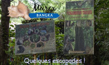 Dossier spécial Murex Dive Bangka (3)